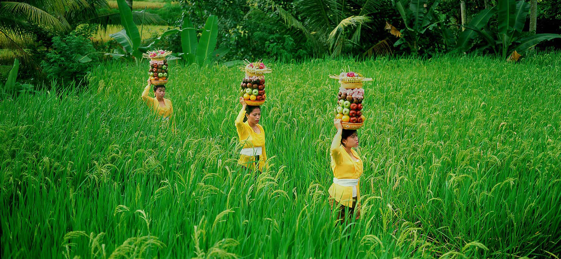 022-Bali-women-rice-field