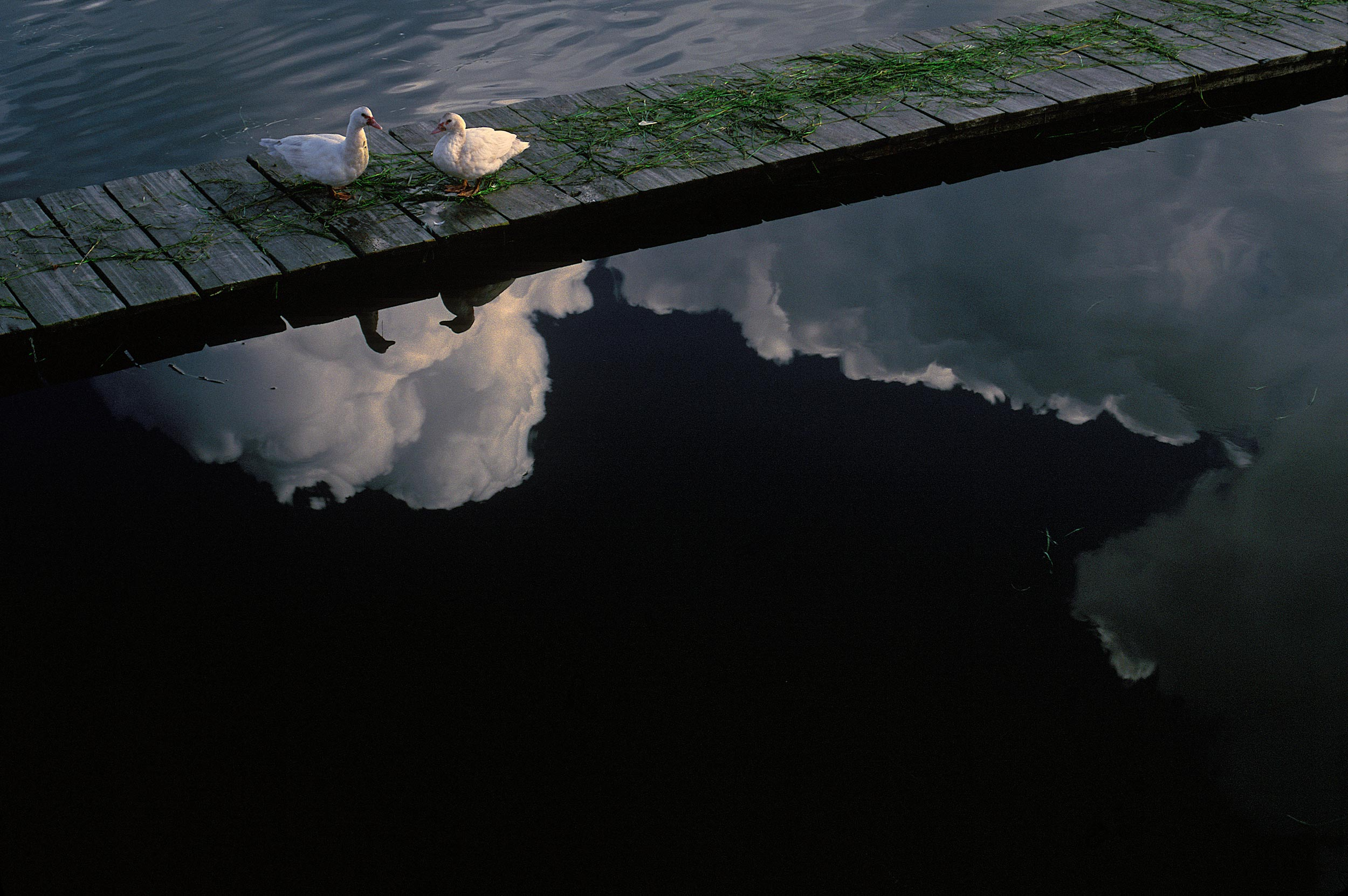 Ducks-with-cloud-reflectionPortugalweb